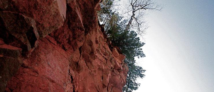 gm-birch-from-below-web