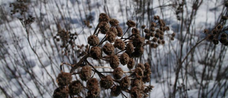 gm-plant-life-web