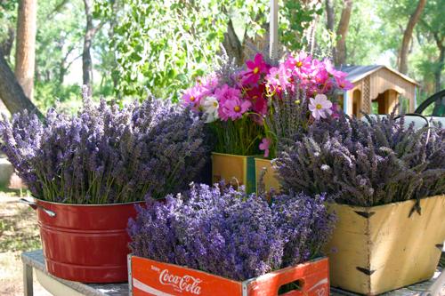 lavendar-baskets-abiquiu-web