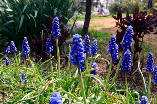 nc-spring-flowers-web