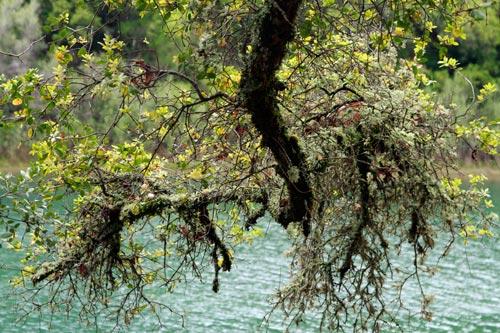 nc-yuba-river2-web