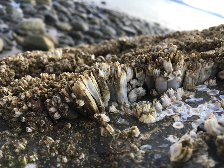 Bishops Beach 2