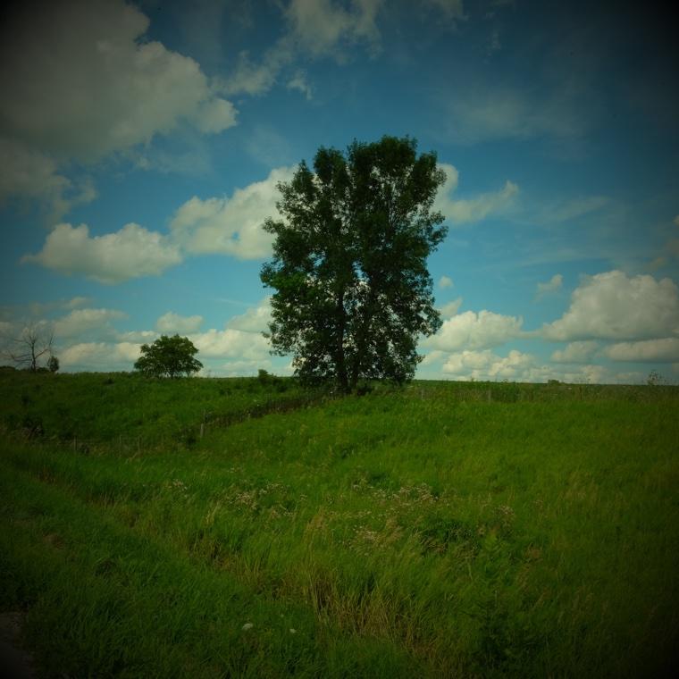 Decorah Landscape 1 *