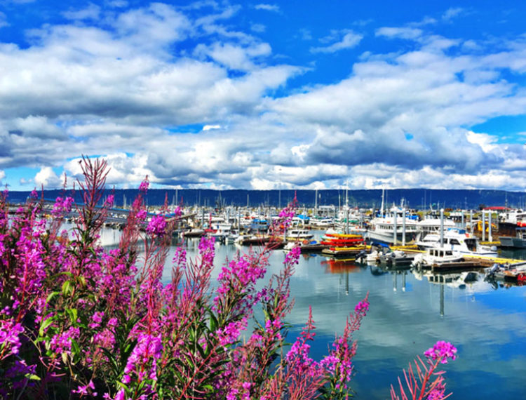 Homer Harbor PC: Nyla Lightcap